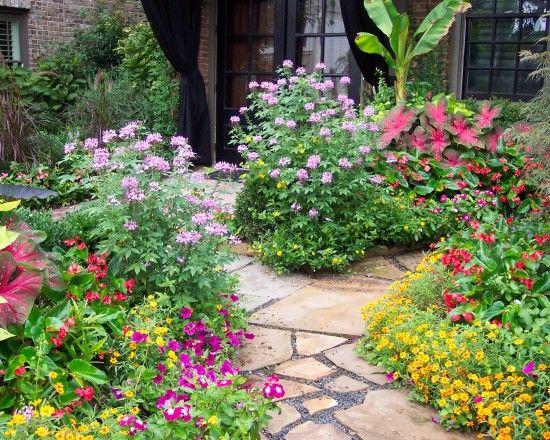 Texas Native Plants Design Ideas Pictures Remodel And Decor Texas Landscaping Texas Native Plants Landscaping Atlanta
