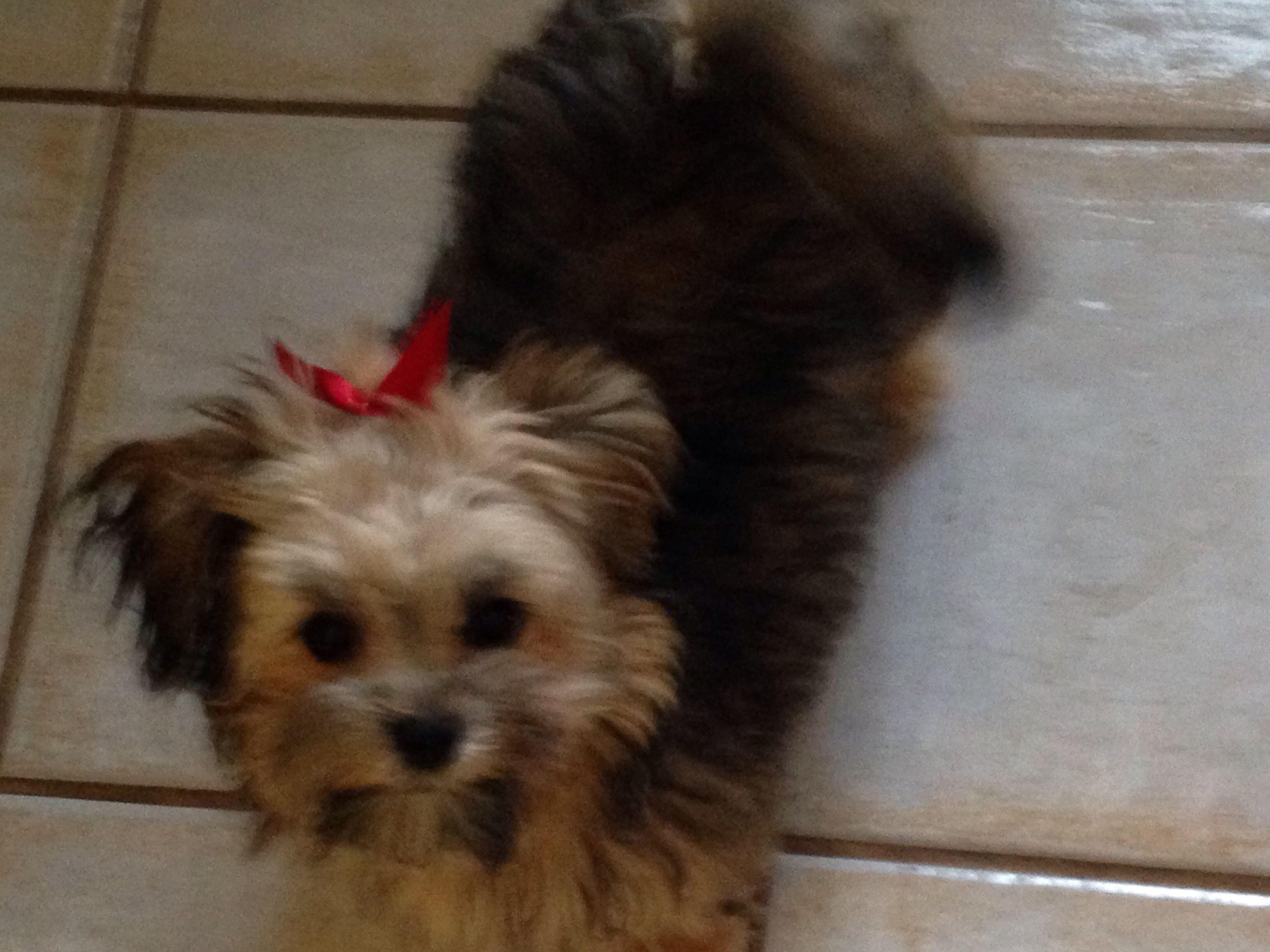 Riley Jane. She's amazing. Angel doll, Dogs, Animals