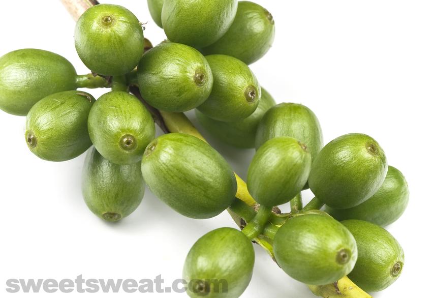 Green Coffee Beans Green coffee bean, Green coffee