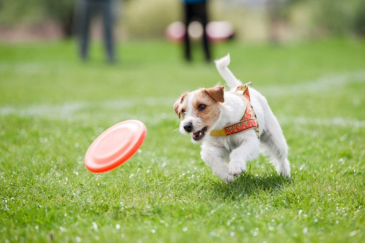 8 Dog Parks In Cincinnati Worth The Drive Dog Park Pets Dog