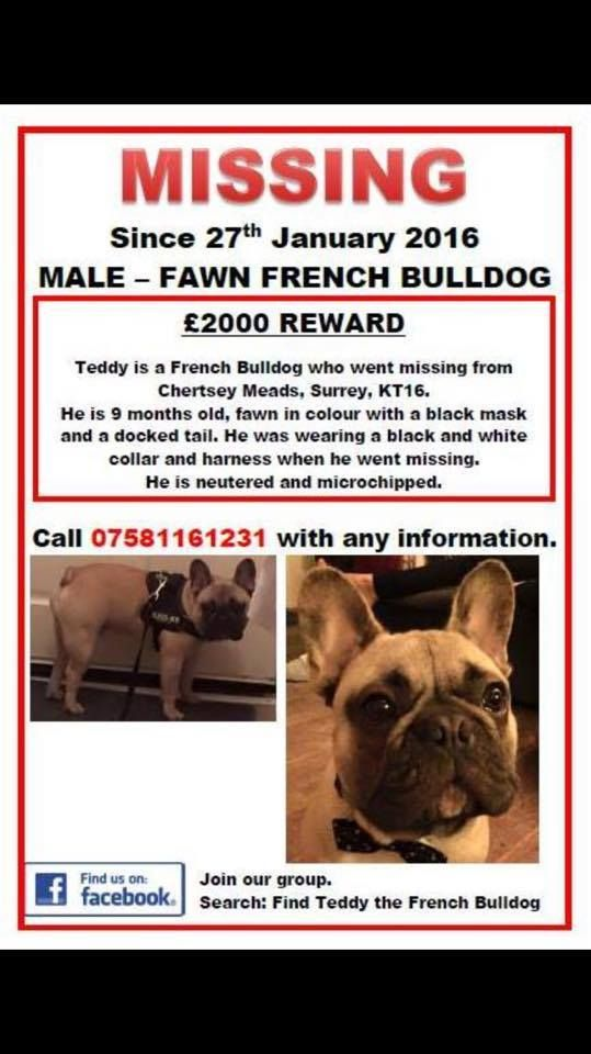Teddy Has Been Missing Since 27th Jan From Chertsey Meads Surrey
