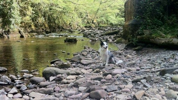 Pet friendly holidays in Wales