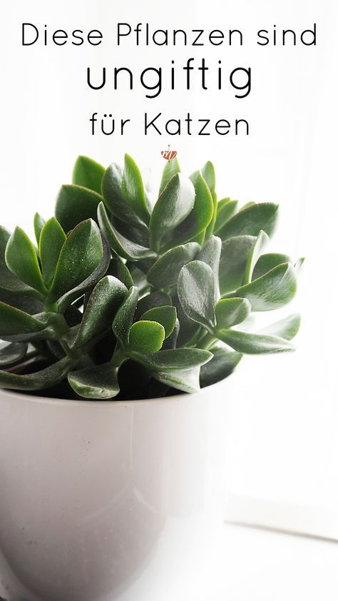 Welche Pflanzen sind ungiftig für Katzen? Zimmerpflanzen - pflanzen für wohnzimmer