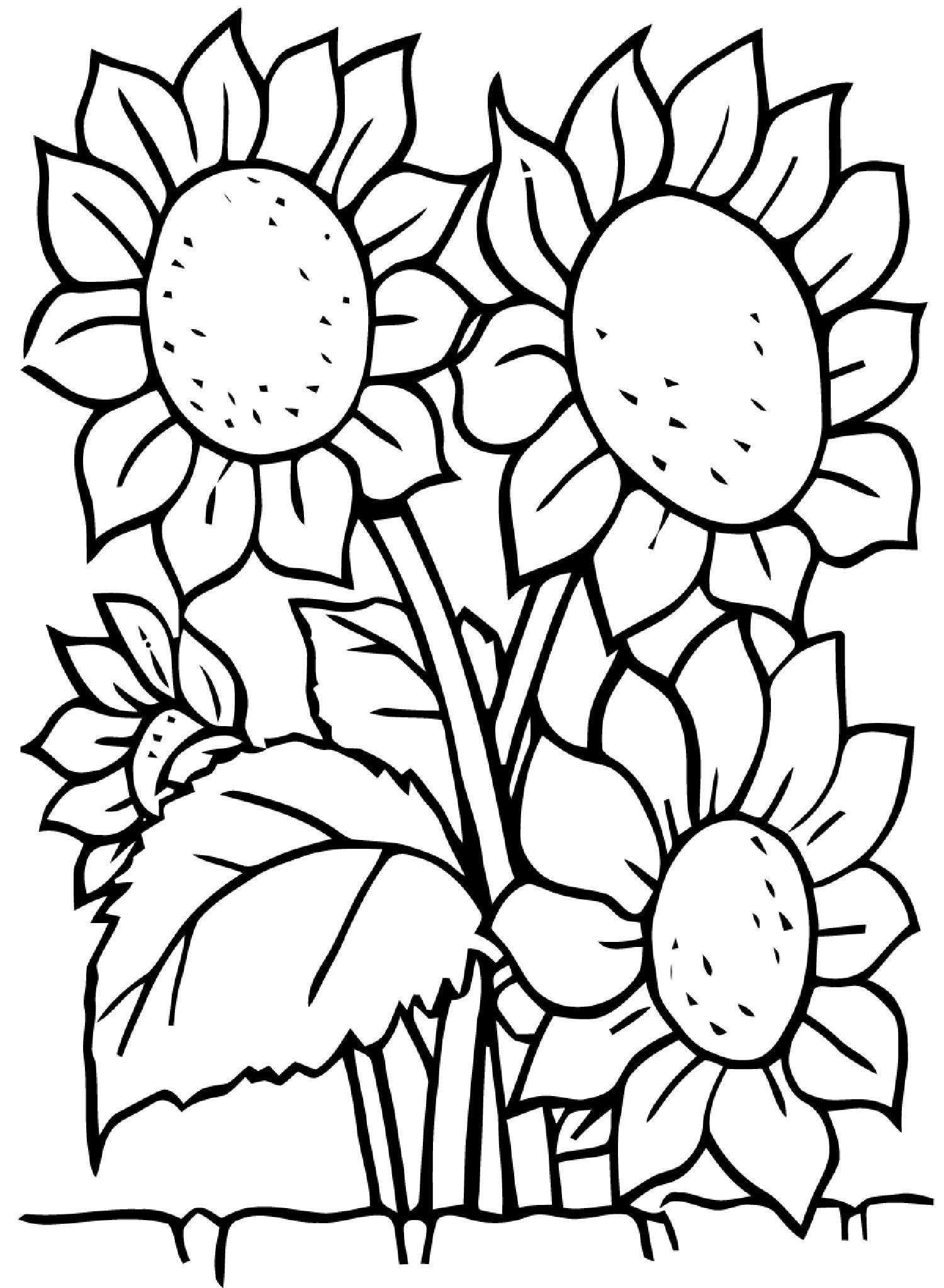 Sunflowers Flowers Coloring Pages For Kids To Print Color