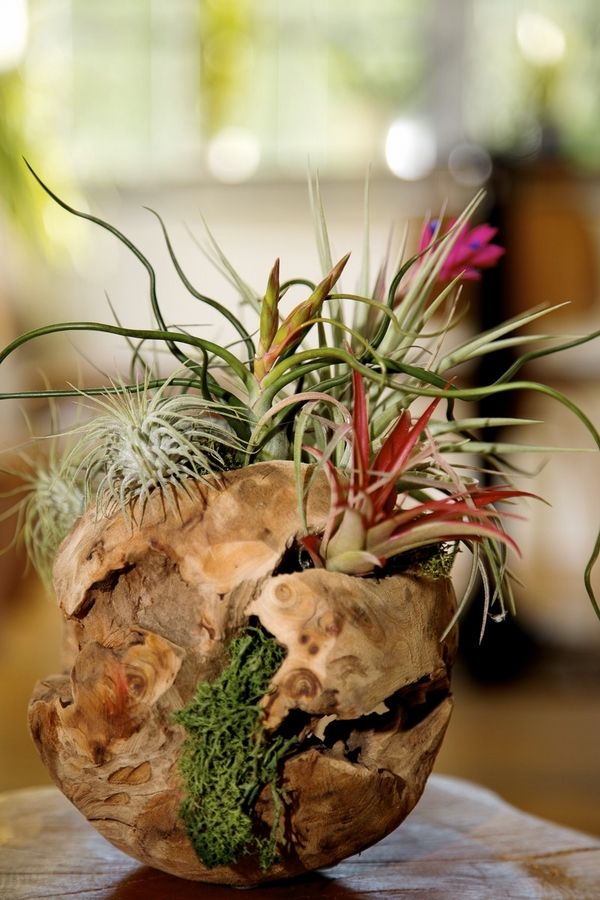 Driftwood sphere spectacular air plants display ideas air for Air plant planters