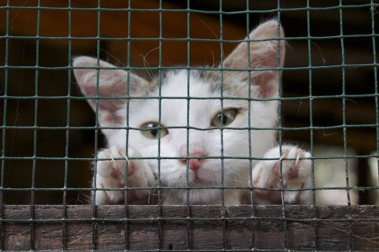Petition Stop Cruel Government Plan To Kill All Non Microchipped Cats In Auckland Nz ねこ 猫