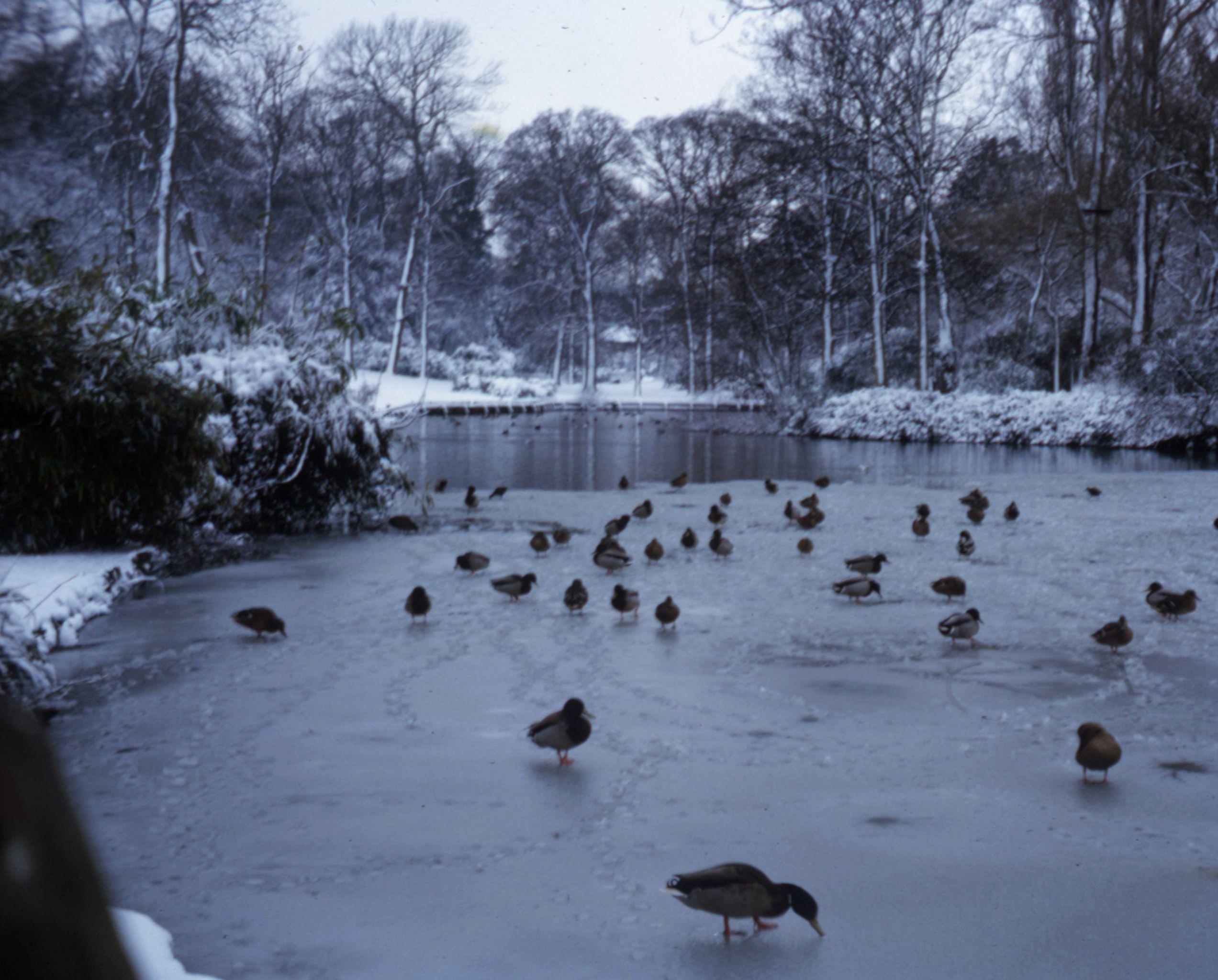 Hampden Park, Eastbourne, East Sussex (early 1965)