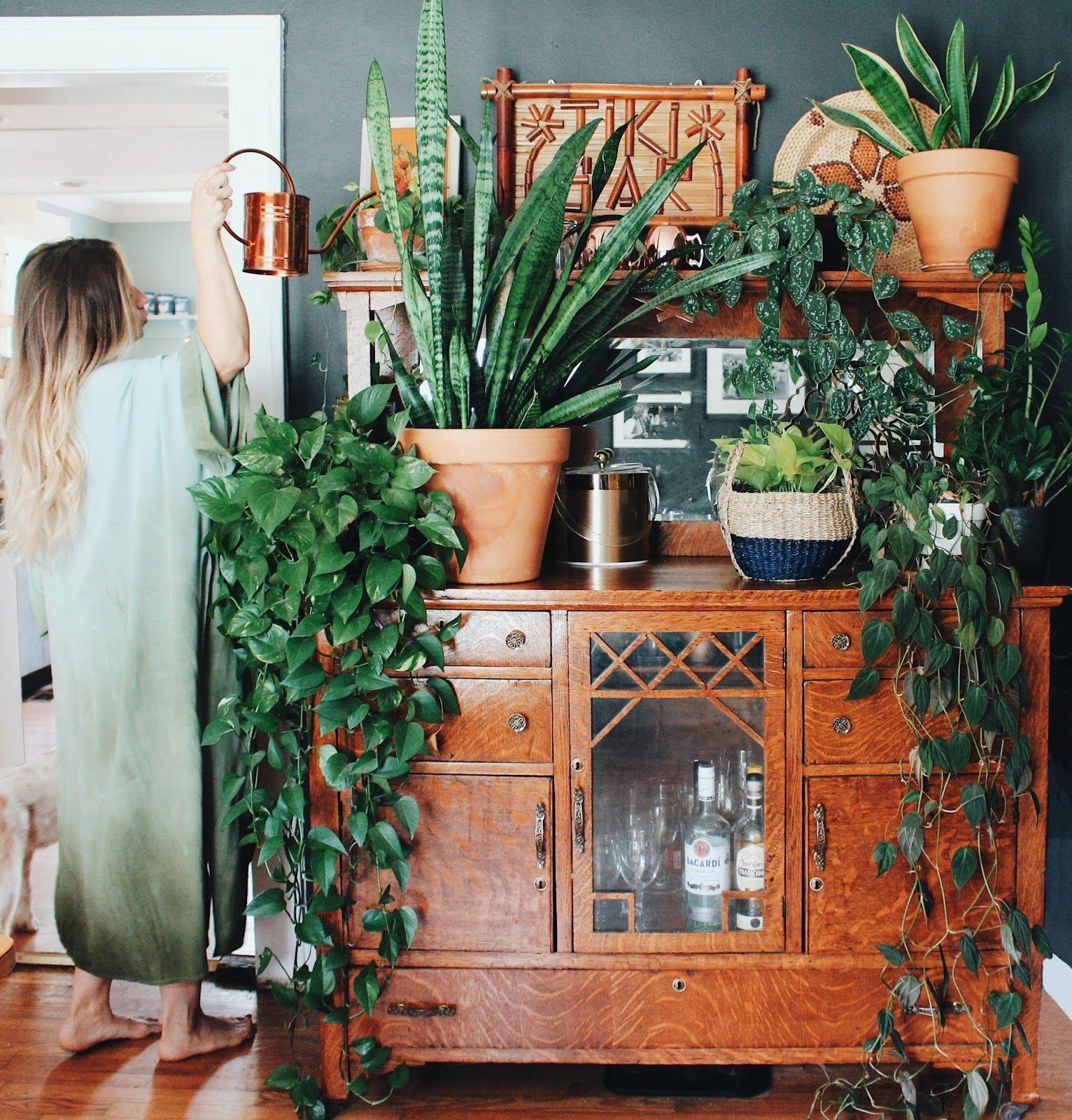 Photo of The 6 Best Houseplants to Grow (+ 5 Challenging Ones) – House plants indoor
