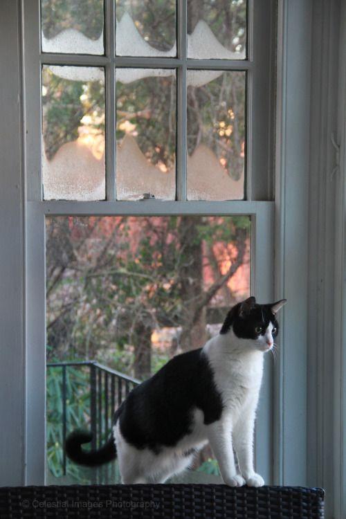 Finding Neverland Gorgeous Cats Cat Window Beautiful Cats