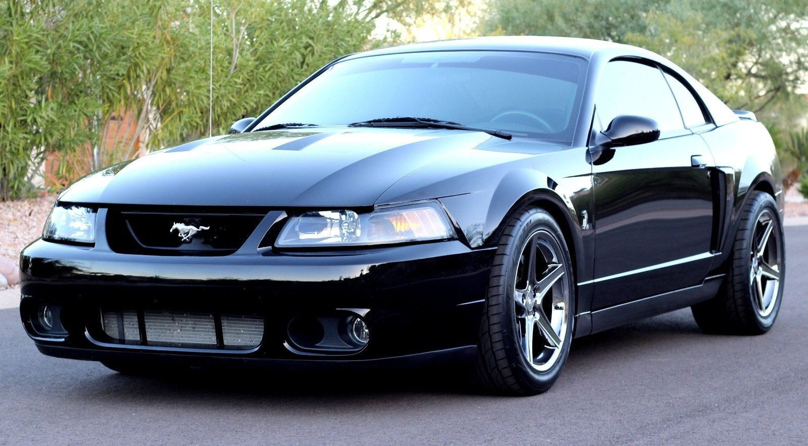 nice great 2003 ford mustang limited edition 2003 ford mustang svt cobra terminator 2017 2018. Black Bedroom Furniture Sets. Home Design Ideas
