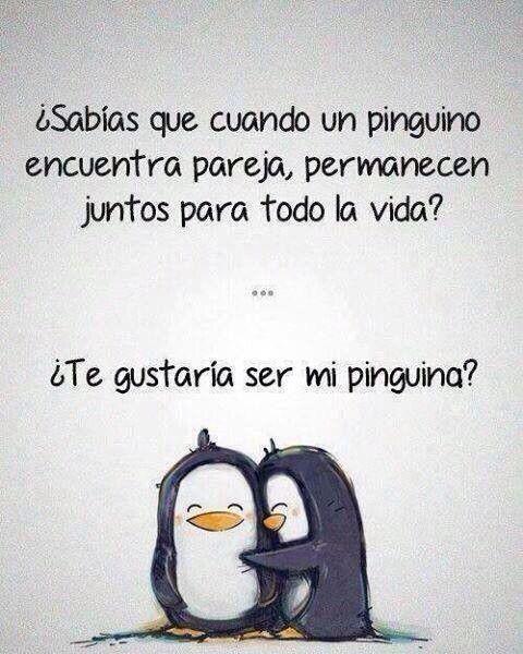 Te Gustaria Ser Mi Pinguina Cosas Lindas Pinterest