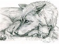 Beautiful Mother And Pup Wolf Drawings Wolf Drawing Wolf Sketch Wolf Puppy