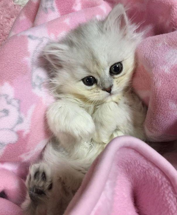 Adorable Luna Kittens cutest, Cute cats, Kittens