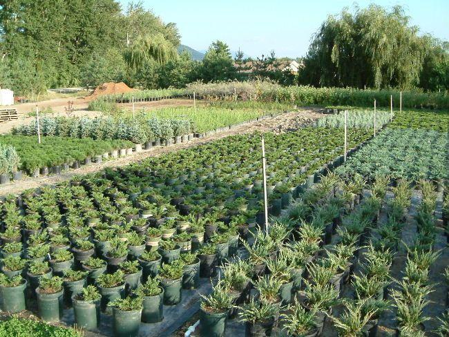 2002 Countryside Garden Centre Begins Shrub Production 400 x 300