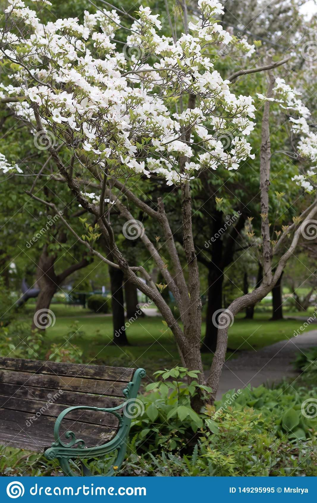 Photo About On A Bench In A Park Rockefeller Greenhouse Cleveland Ohio Trees Nature Wooden Old Path Summer Spring B Ohio Trees Flowering Trees Tree