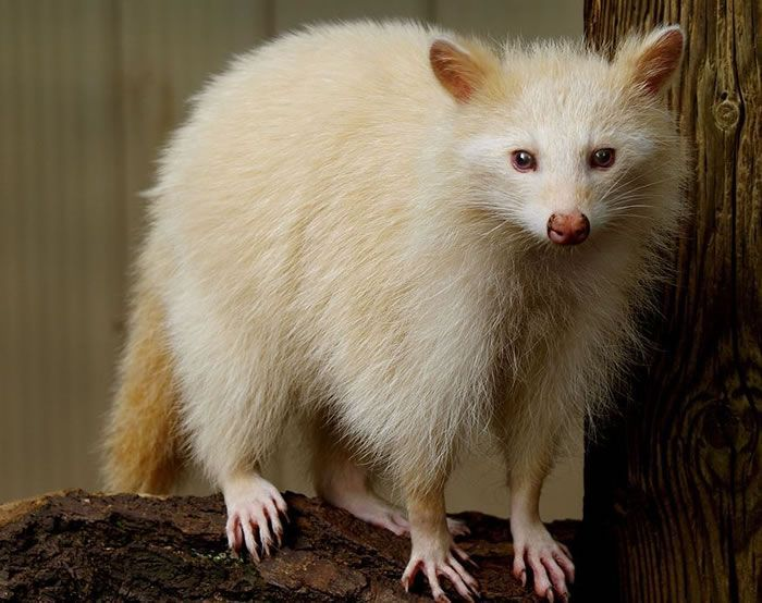 21 Unusual And Totally Amazing Albino Animals,  #Albino #albinoanimalalbinism #Amazing #anima... #albinoanimals
