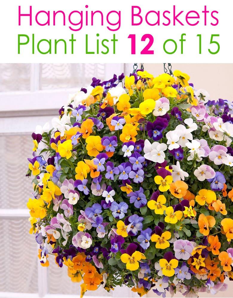 15 Beautiful Flower Hanging Baskets Best Plant Lists In 2020 Hanging Flower Pots Hanging Flower Baskets Plants For Hanging Baskets