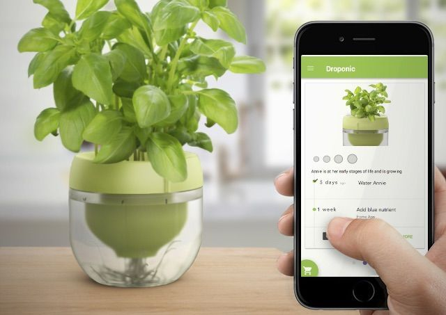 Captivating Smart Indoor Herb Gardens   This Pot And Plant App System Makes It Easy To  Grow