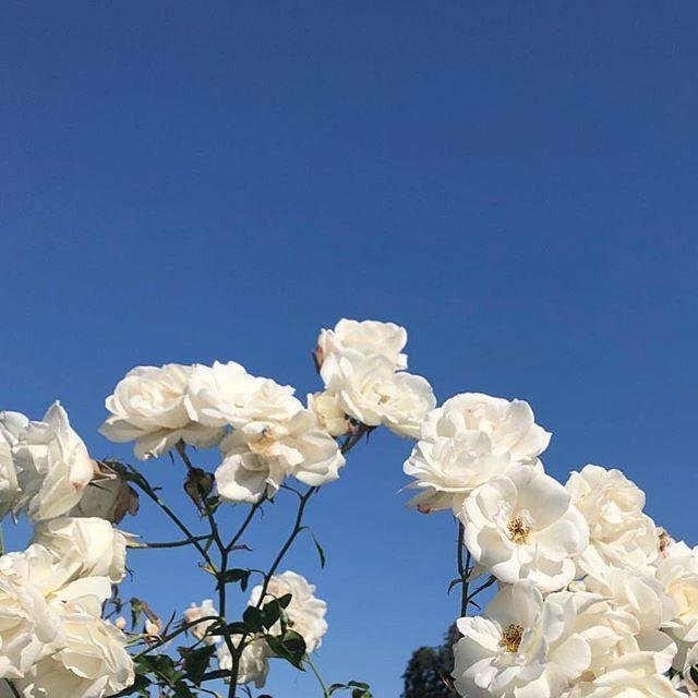 ρяσfιℓ ℓαи∂ ®   Flower aesthetic, Aesthetic roses, Nature aesthetic