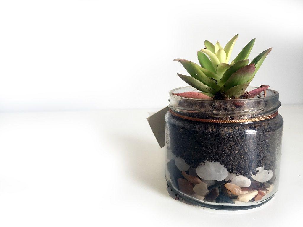 Home decor plants ideas  Zen Bottles with Colour Changing Plant  Pots u Planters Garden Home
