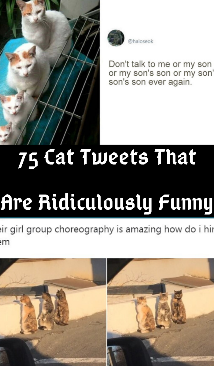 75 Tweets Proving Cats Are Hilarious Creatures Funny Cats Lol