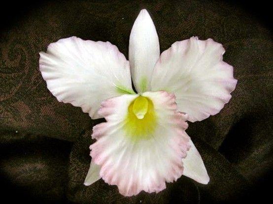 Cattleya Orchid In Sugar Gumpaste By Pilar Gonzalez Of Sunflower Sugar Art Flores De Azucar Flores De Porcelana Fria Flores