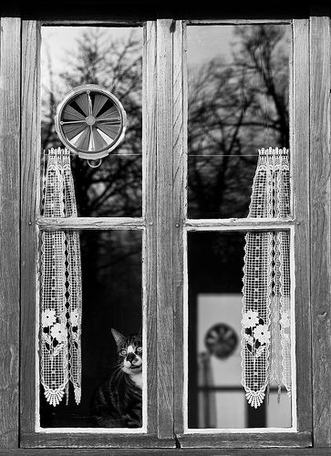 Le chat de la fenêtre