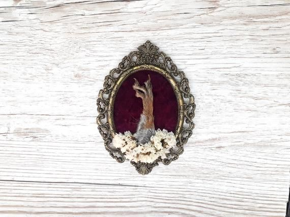 Photo of Real antique vintage frame with real squirrel foot and dried flowers – taxidermy curiosities odditie