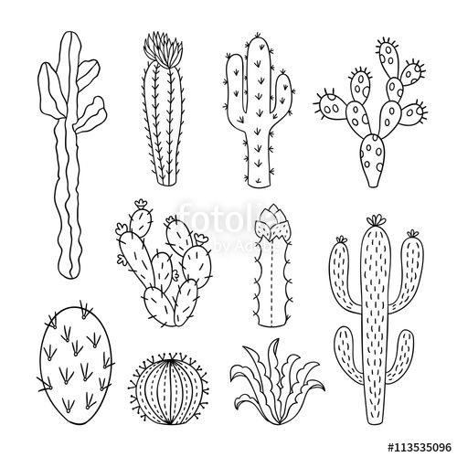 Cactus outline vector illustrations. Succulents plants ...