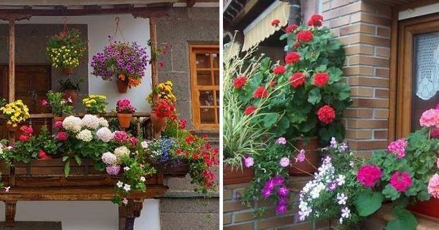 plantas colgantes de exterior para vergeles en balcones y ventanas