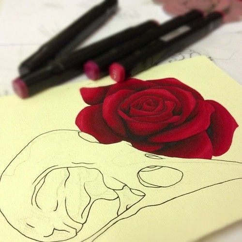 new school rose - Google Search