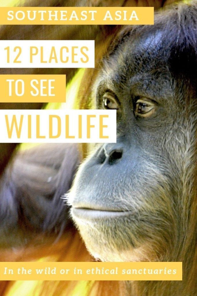 12 ethical places in Southeast Asia to see wildlife - #12 #Asia #ethical #in #Places #See #Southeast #to #wildlife