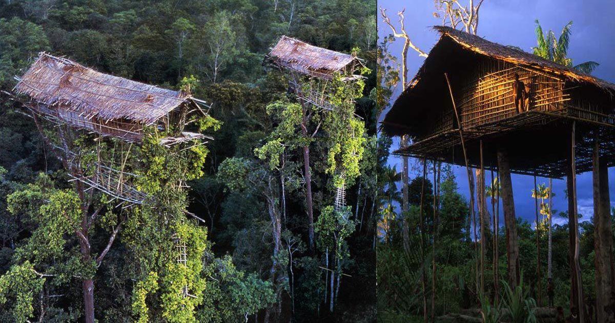 Le case dei popoli Kombai e Korowai in Papua Nuova Guinea sono vertiginosi edifici alti sino a 20 metri. Le abitazioni, che sembrano letteralmente delle case sospese nell'aria, offrono alle popolazion