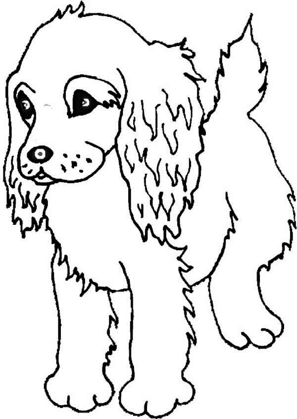 Boykin Spaniel Puppy Coloring Page Free Puppies Coloring Pages