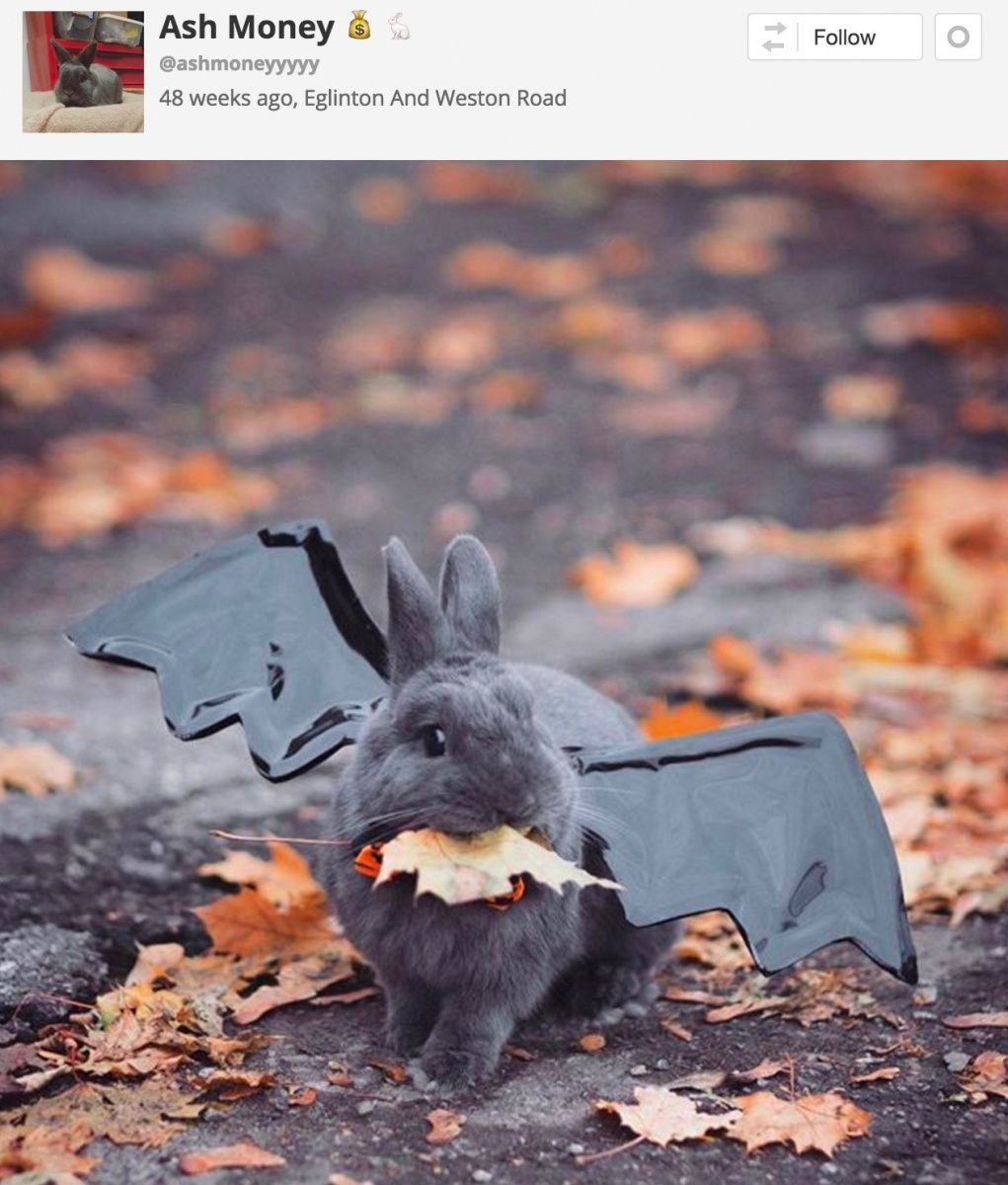 24 Ridiculously Adorable Pet Costumes You HAVE To See