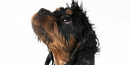 Best Shampoos for Dogs Flea shampoo for cats, Best