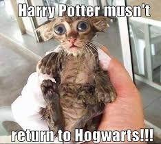 Harry Potter Funny Cat Meme Cats Wet Kitty Harry Potter Cat Harry Potter Quotes Funny Harry Potter Funny