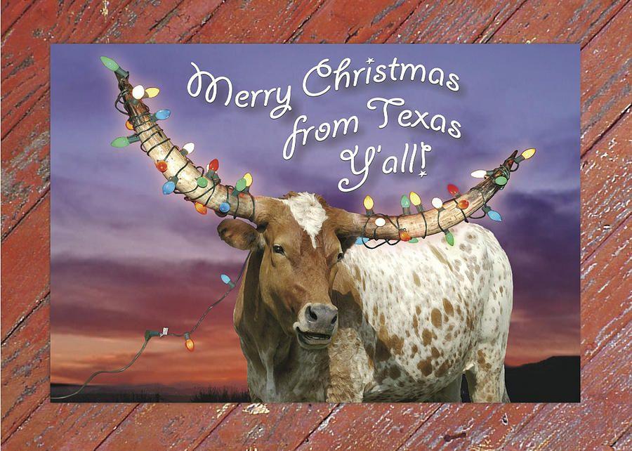 Texas Longhorn Christmas Card Photograph | Christmas | Pinterest ...