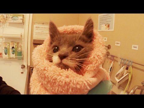 A Day Inside A Kitten Nursery