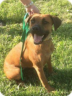 Pin By Anita Salas On Can You Help Boxer Mix Pets Pet Adoption