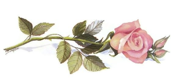 Rose Pink Long Stem Flower Long Stem Flowers Single Rose Watercolor Paintings