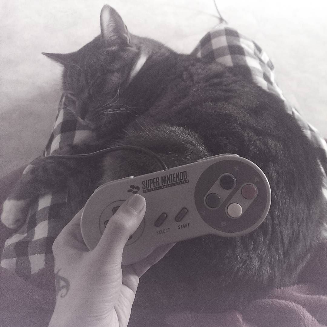 On instagram by surinasussu #retrogaming #microhobbit (o) http://ift.tt/1VAxYbU  buddy  You know this happens when you're stuck in the game and you just want to throw the controller in the wall.   #retrogamer  #supernintendo #nintendo #controller #cat #caturday