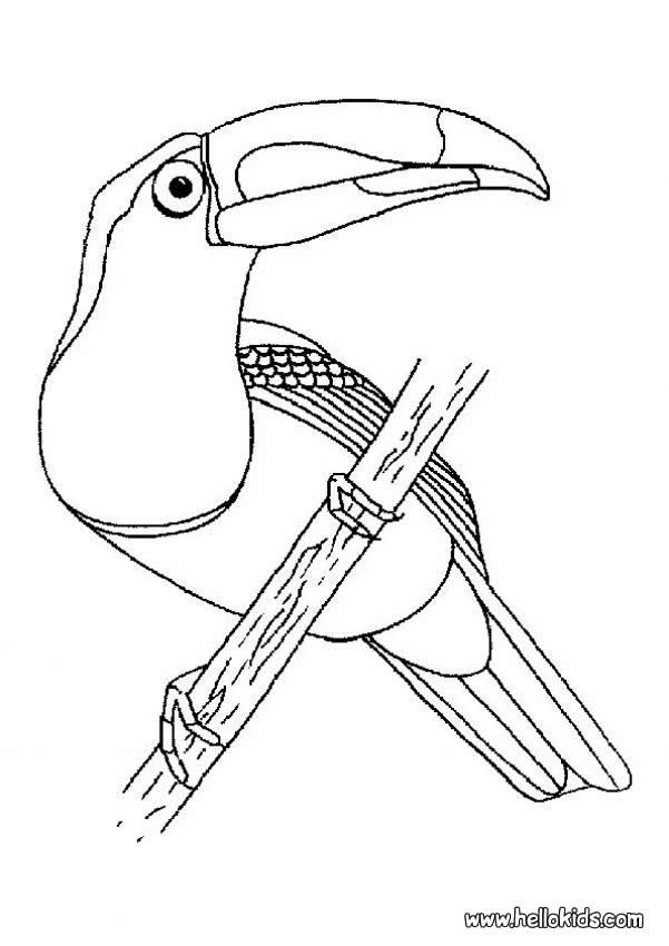 Bird Coloring Pages Bird Nest Pinturas De Passaros Passaro
