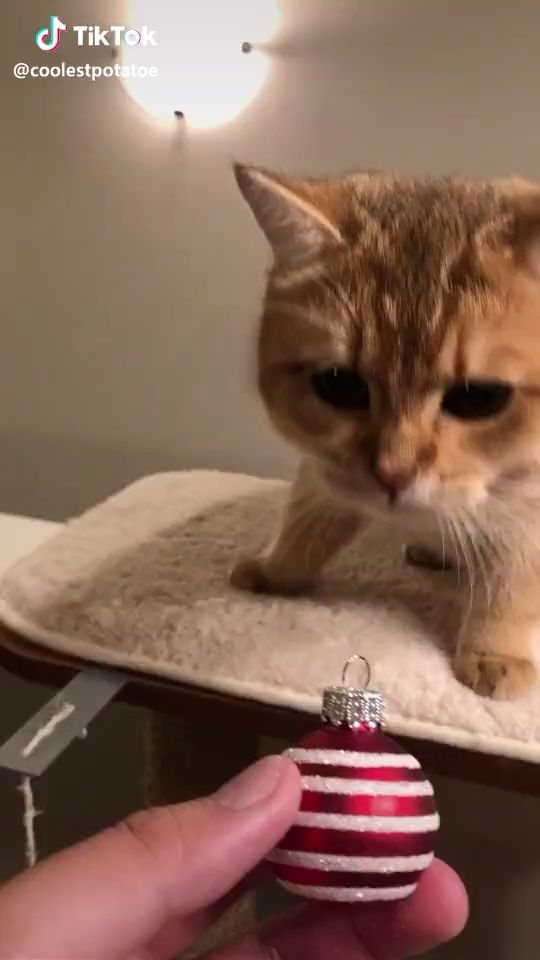 Cr Coolestpotatoe On Tiktok Video Cute Funny Animals Cute Animal Videos Cute Baby Videos