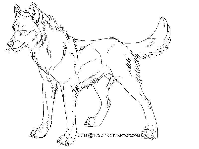 coloring pages anime wolfs | wolf coloring pages for adults ...