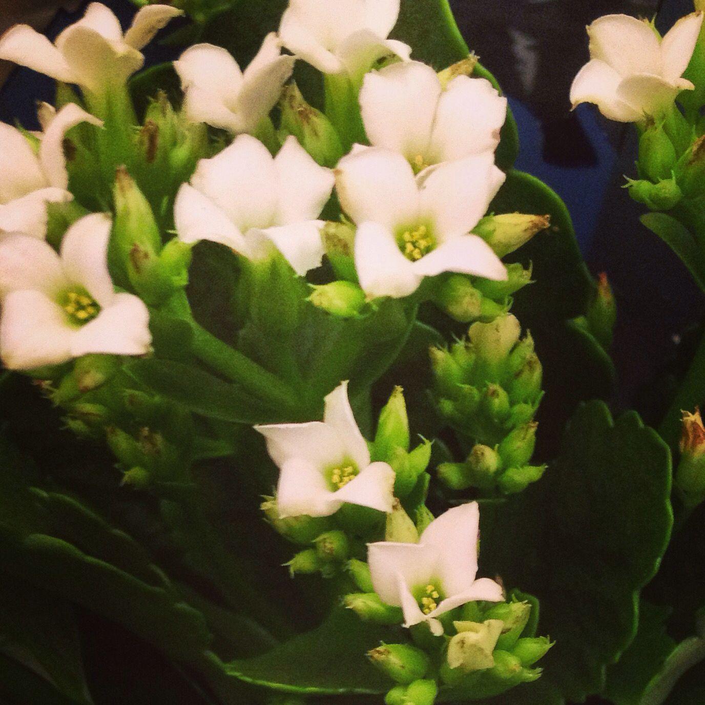 No meu lar flores frescas são sempre bem vindas