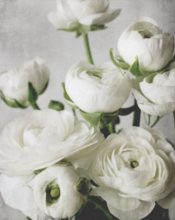 White Ranunculus Flower Photography Botanical Print White Gray Green Floral Romantic Bedroom Wall Art Ranunculus Four