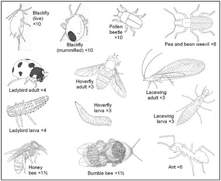 Observing and identifying bugs project with FREE