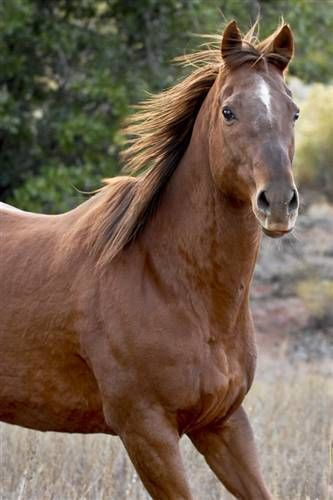 Adopt From Our Sanctuary Animals Horses Animal Society