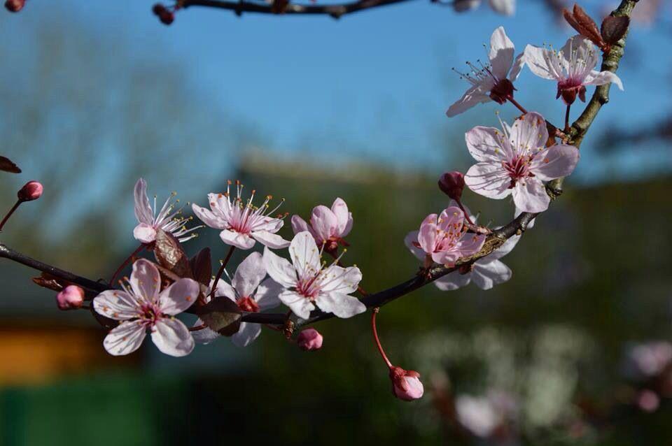 Fleurs de Prinus